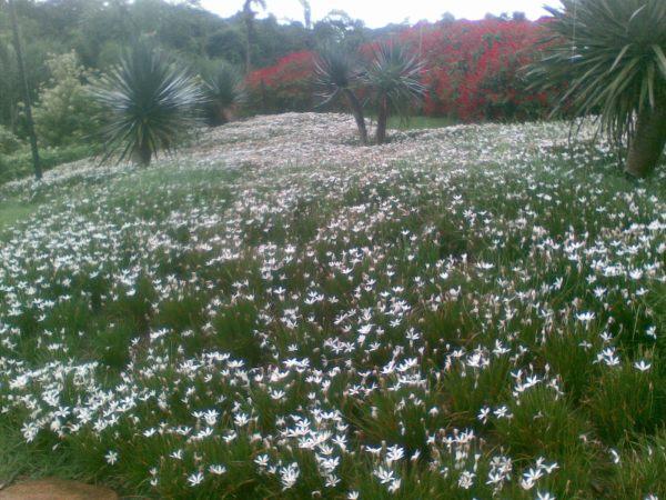 Uma das muitas maravilhas que podem ser vistas nos jardins de Inhotim. A foto foi feita pela Márcia com celular. Imaginem se tivéssemos levado a máquina fotográfica!