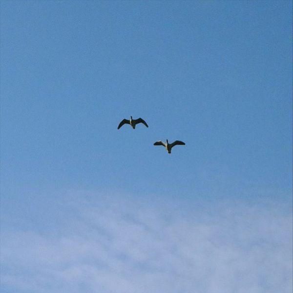 Dois Pássaros_Foto Fitti