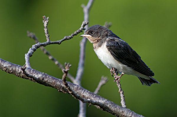 Pássaro 2